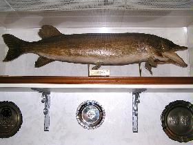 Fisch-Bild